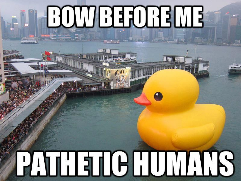Rubber Duck Temporarily Deflates Again Netizens Respond With Memes Duck Memes Funny Pictures Funny Duck