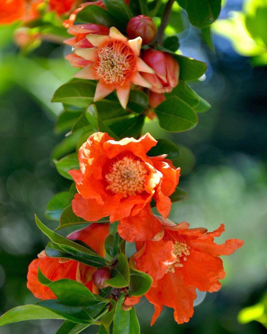 Adivina Adivinanza Acostumbrados A Ver La Fruta En El Supermercado Y En El Plato Hoy Os Enseno Una Mucho Antes De Ser Flowers Plants Bloom