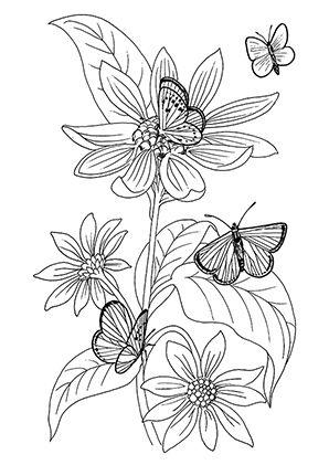 Schmetterlinge Malvorlagen Ausmalen Blumen Ausmalbilder Blumenzeichnung