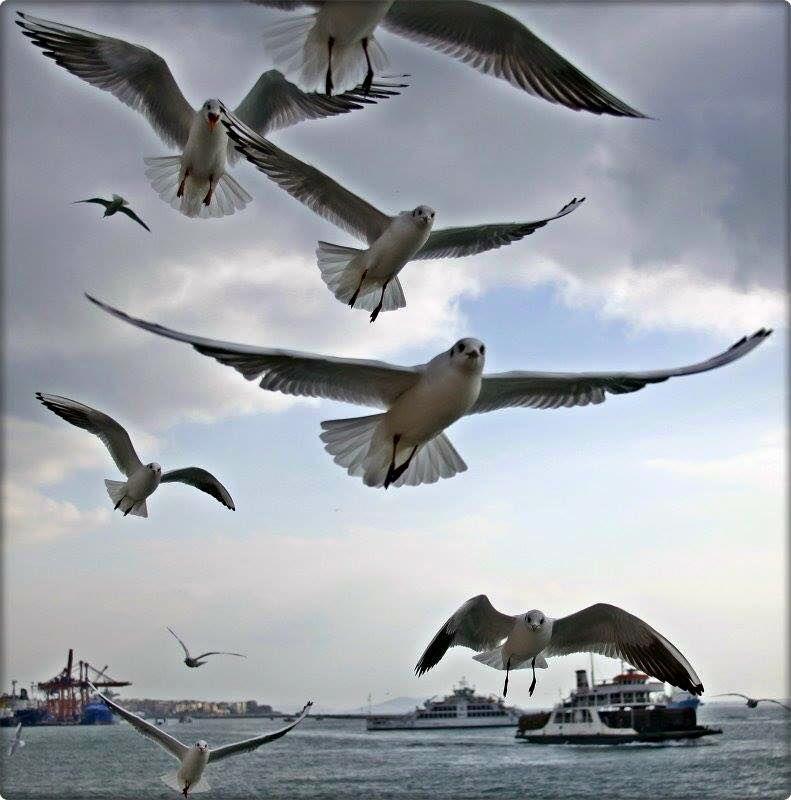 伊斯坦布爾的海鳥們等不及向人問好!(其實是有麵包在等著他們):)