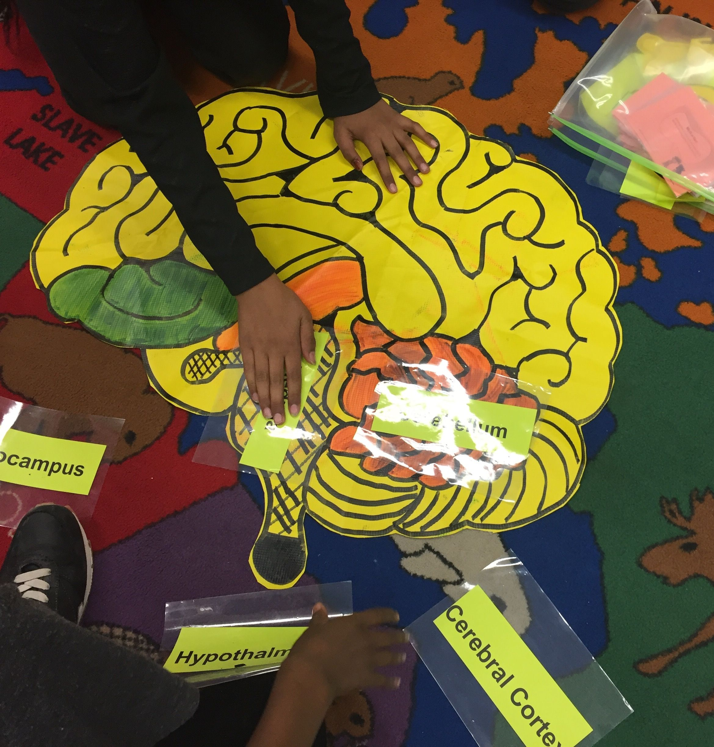 Grade 5 labeling parts of the brain identifying their job and the grade 5 labeling parts of the brain identifying their job and the effects of alcohol on various parts of the brain ccuart Images