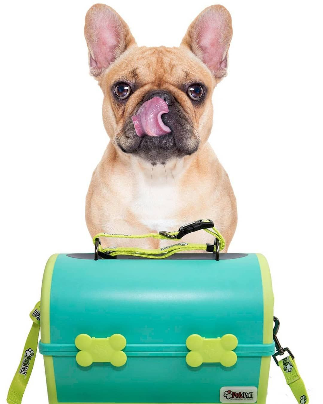 My Pet Pail Petapproved Order Today Mypetpail Com Shop Teal Yellow Pet Pets Petlife Petsofinstagram Pettravel Pet Travel Pets Pet Life