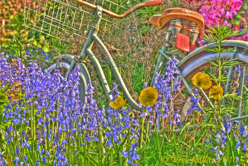 Flowers and Old Bike