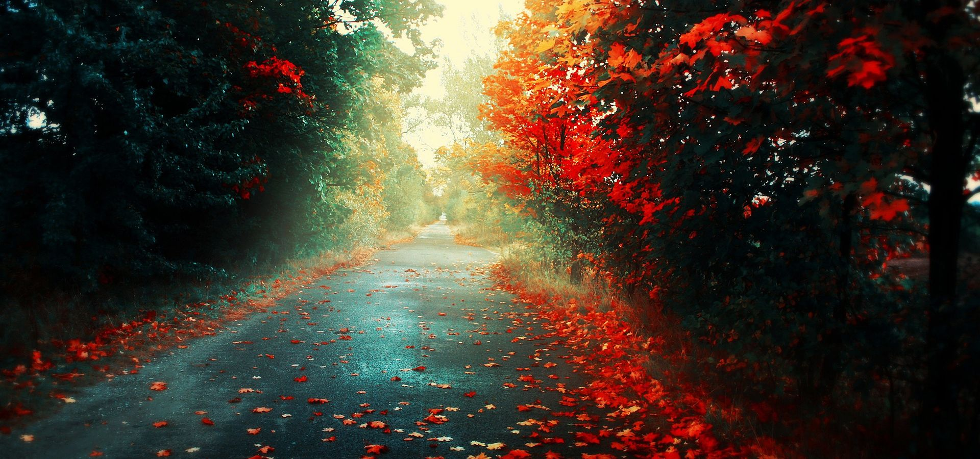 Hd Autumn Street Wallpaper Facebook Cover Images Nature Photography Hd Wallpaper