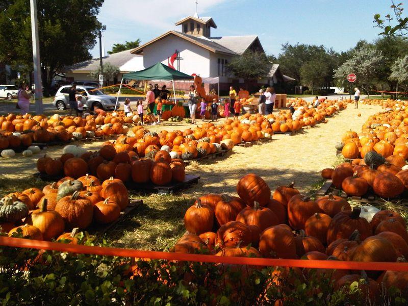 autumn in florida Google Search Florida, Pumpkin patch