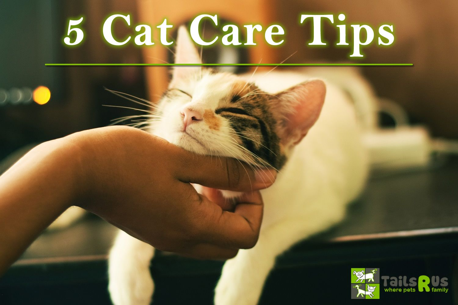 Here are 5 cat care tips you should keep in mind 1. Clip