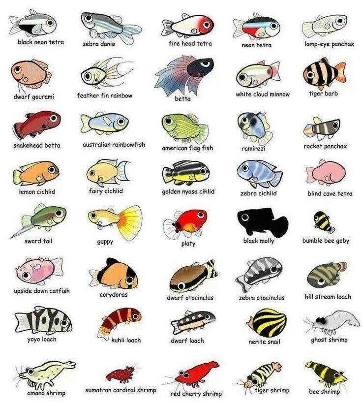 Aquarium fish fish pinterest aquarium fish for Names for pet fish