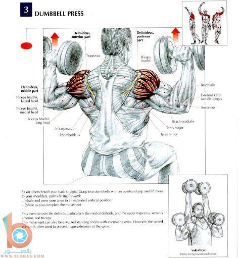بالصور تمارين عضلات الظهر