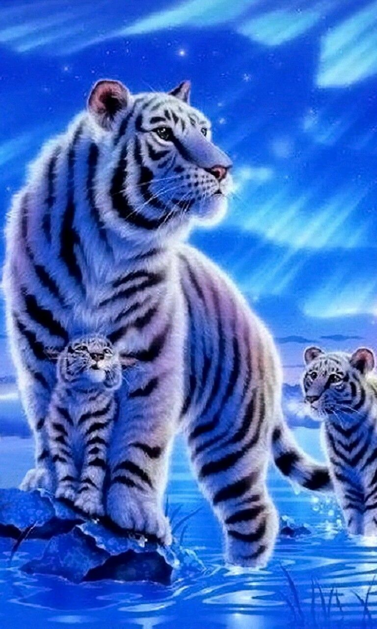 Beautiful Cute Tigers Tiger Wallpaper Cute Wallpaper For Phone