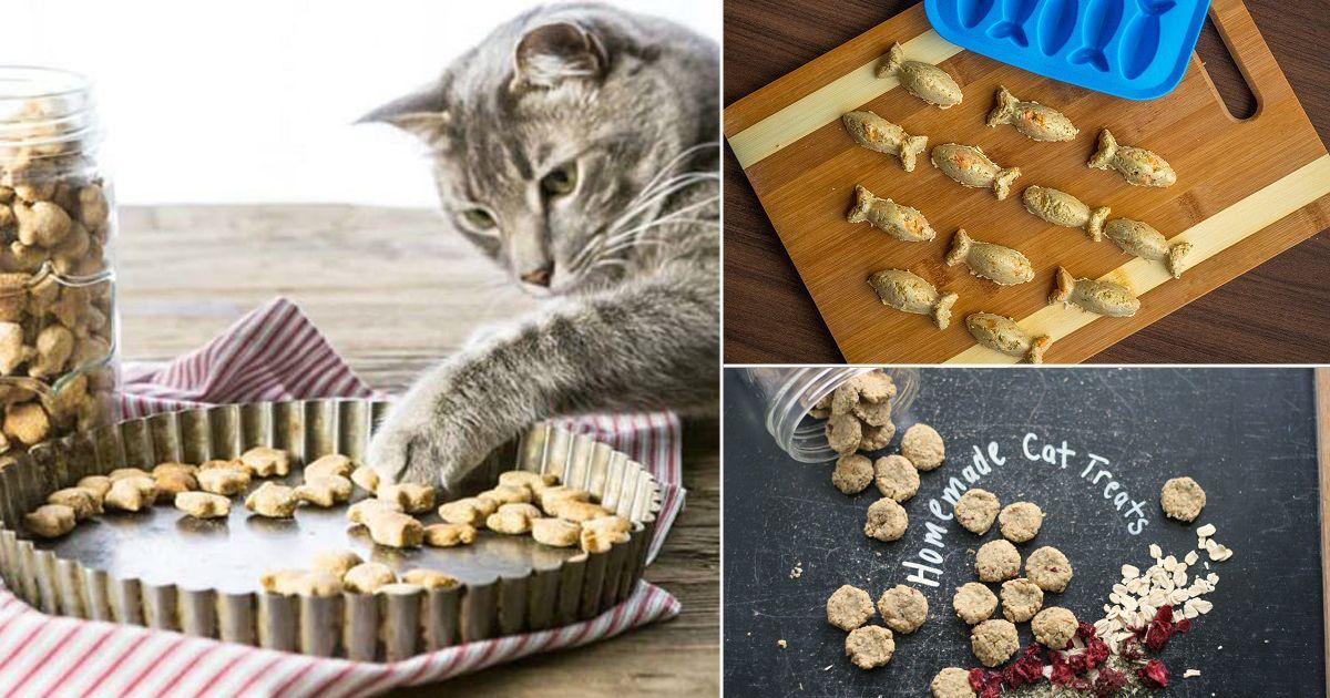 43 Homemade Cat Treat Recipes (Delicious & Healthy
