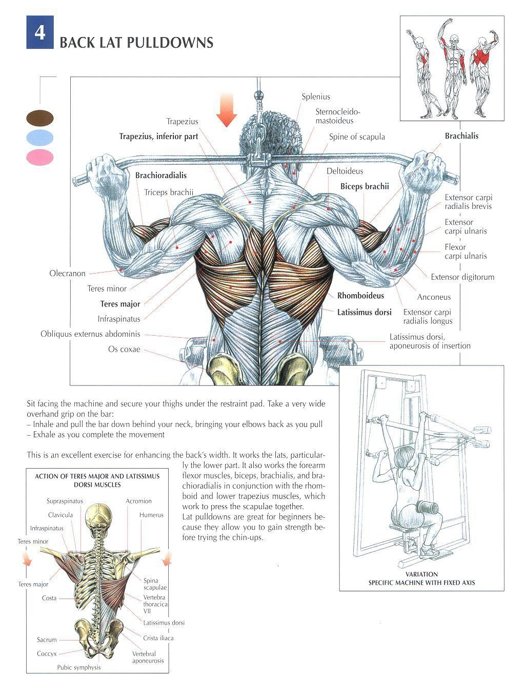 5 Tips for Building Muscle! | Pinterest | Iron, Workout and Arm muscles
