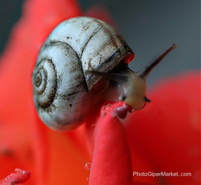 Oshibka Otzyvy O Fotografah Snail Sea Snail Slugs