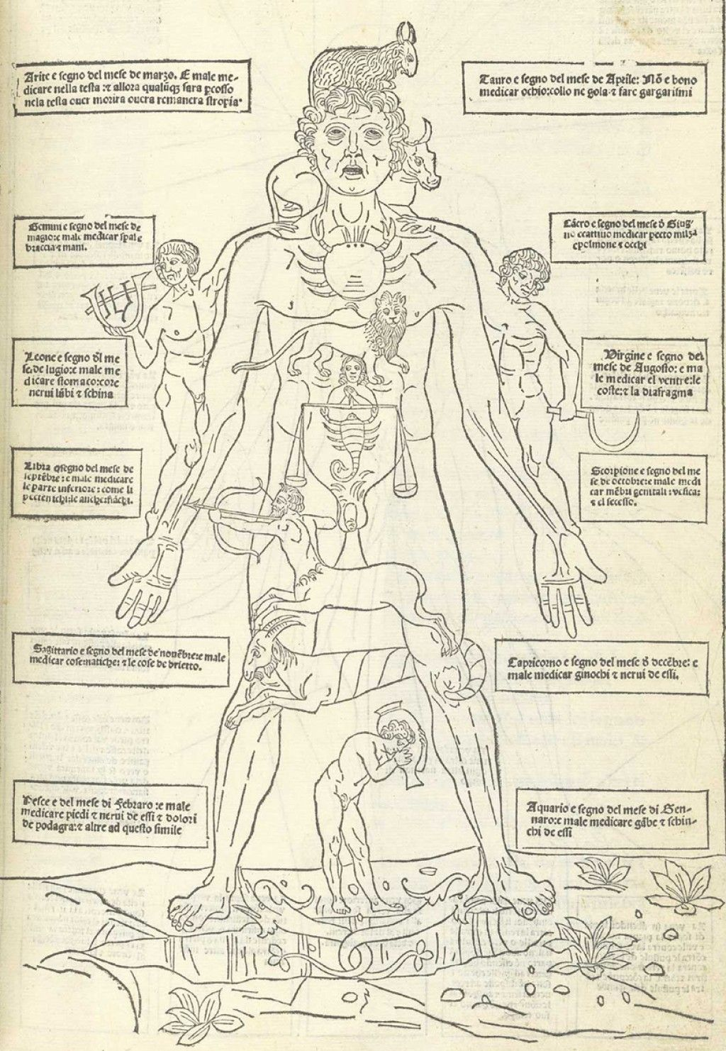 Every Organ Tells A Story 5 A History Of Anatomical Terms
