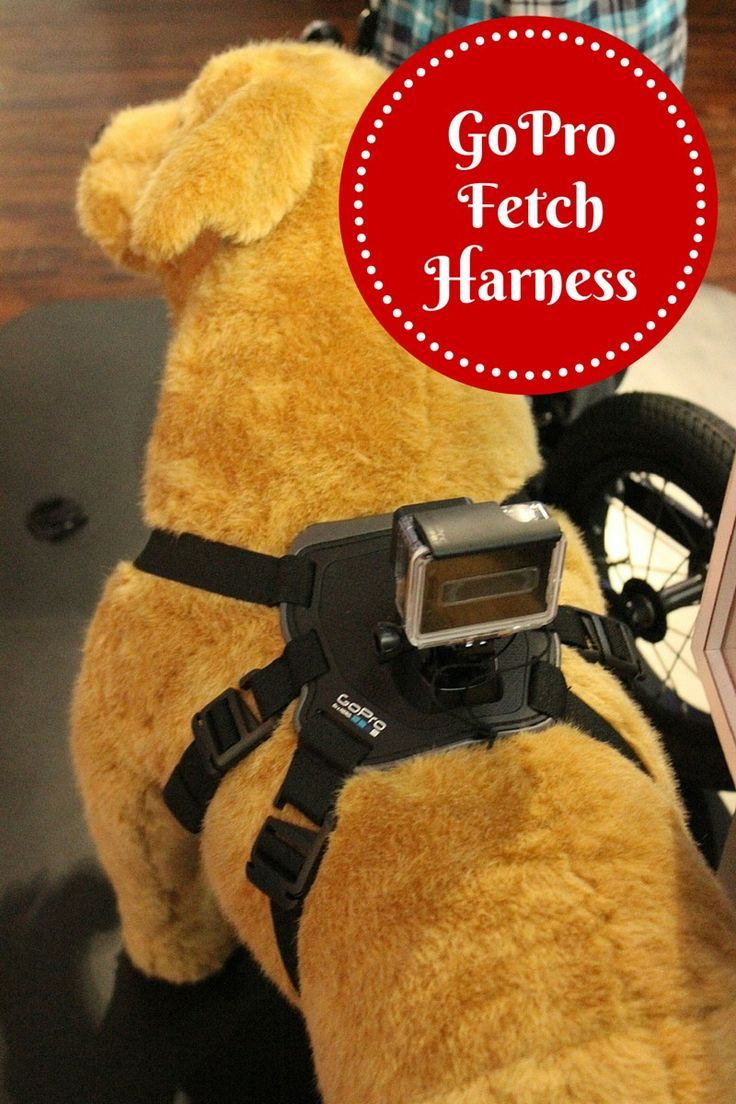 GoPro Fetch Dog Harness Offers a New Perspective for Dog