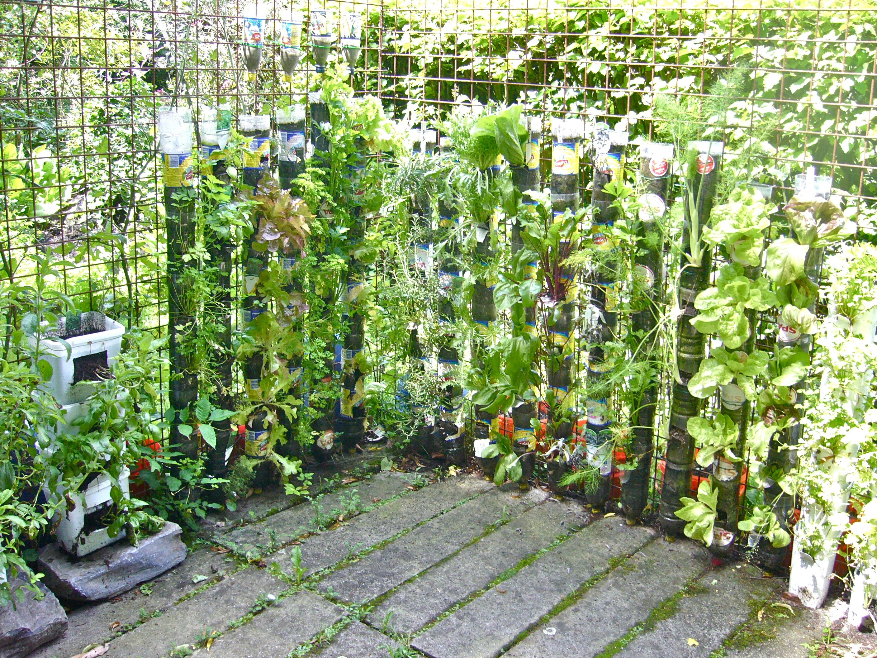 Urban gardening ideas containers - My Questions To Wfp Willem Van Cotthem Vertical Vegetable Gardensvegetable Gardeningcontainer Gardeningurban
