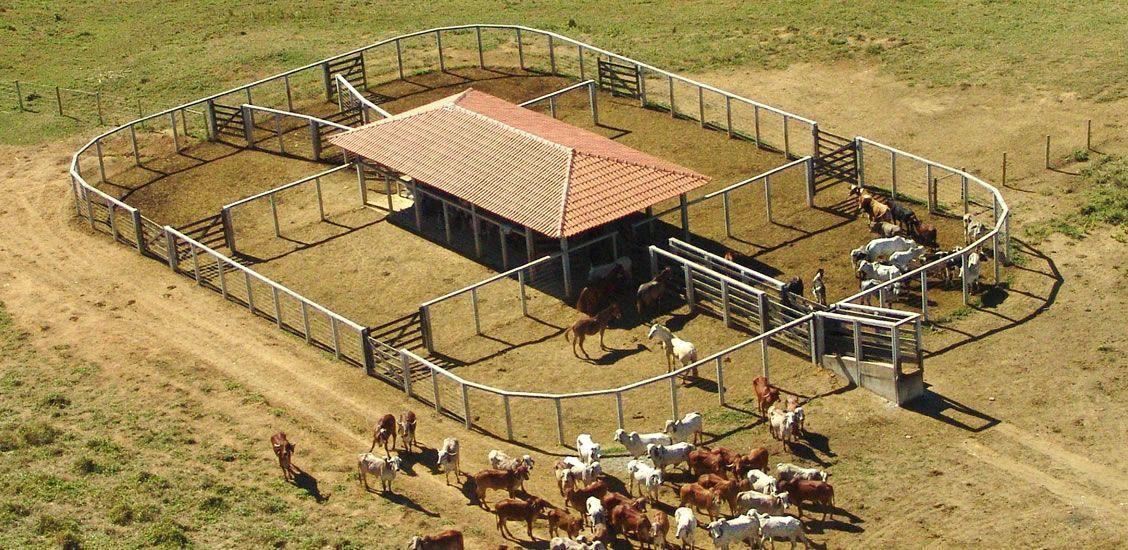 Curral Para Bovinos: Aprenda Tudo Sobre Criação De Gado   Animais - Cultura  Mix   Haras, Gado, Rancho de gado