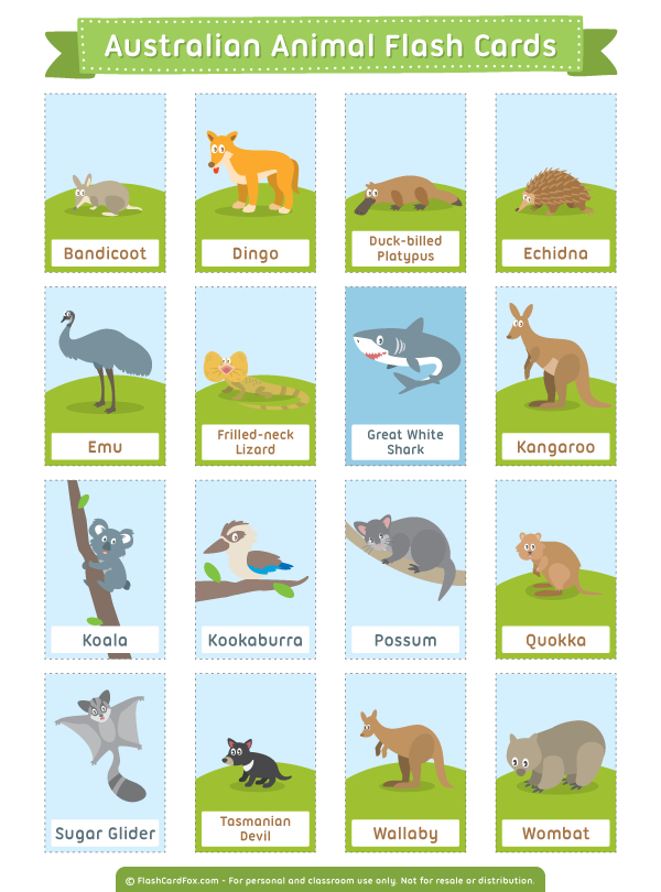 Free Printable Australian Animal Flash Cards Download Them In Pdf Format At Http Flashcardfox Com Animal Flashcards Australian Animals Preschool Flashcards