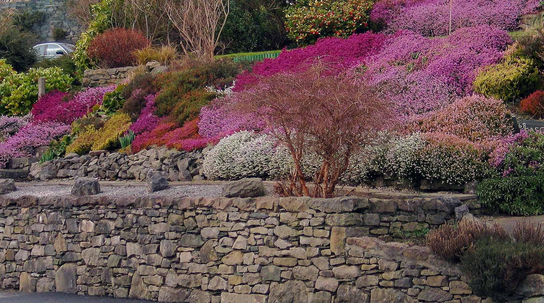 wrzos ma os heather gardens