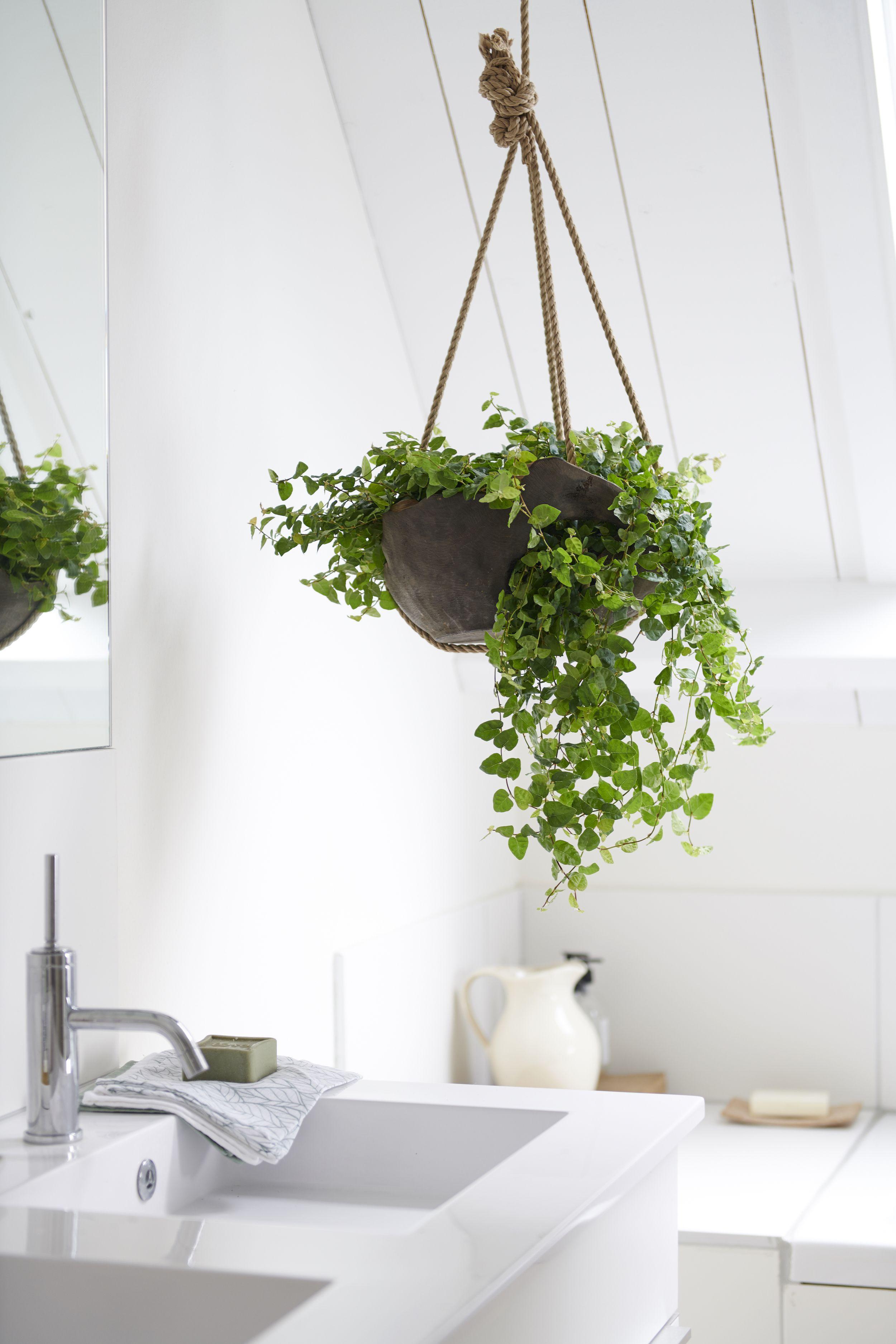 Badezimmerpflanzen für den Mai  Badezimmerpflanzen, Pflanzen