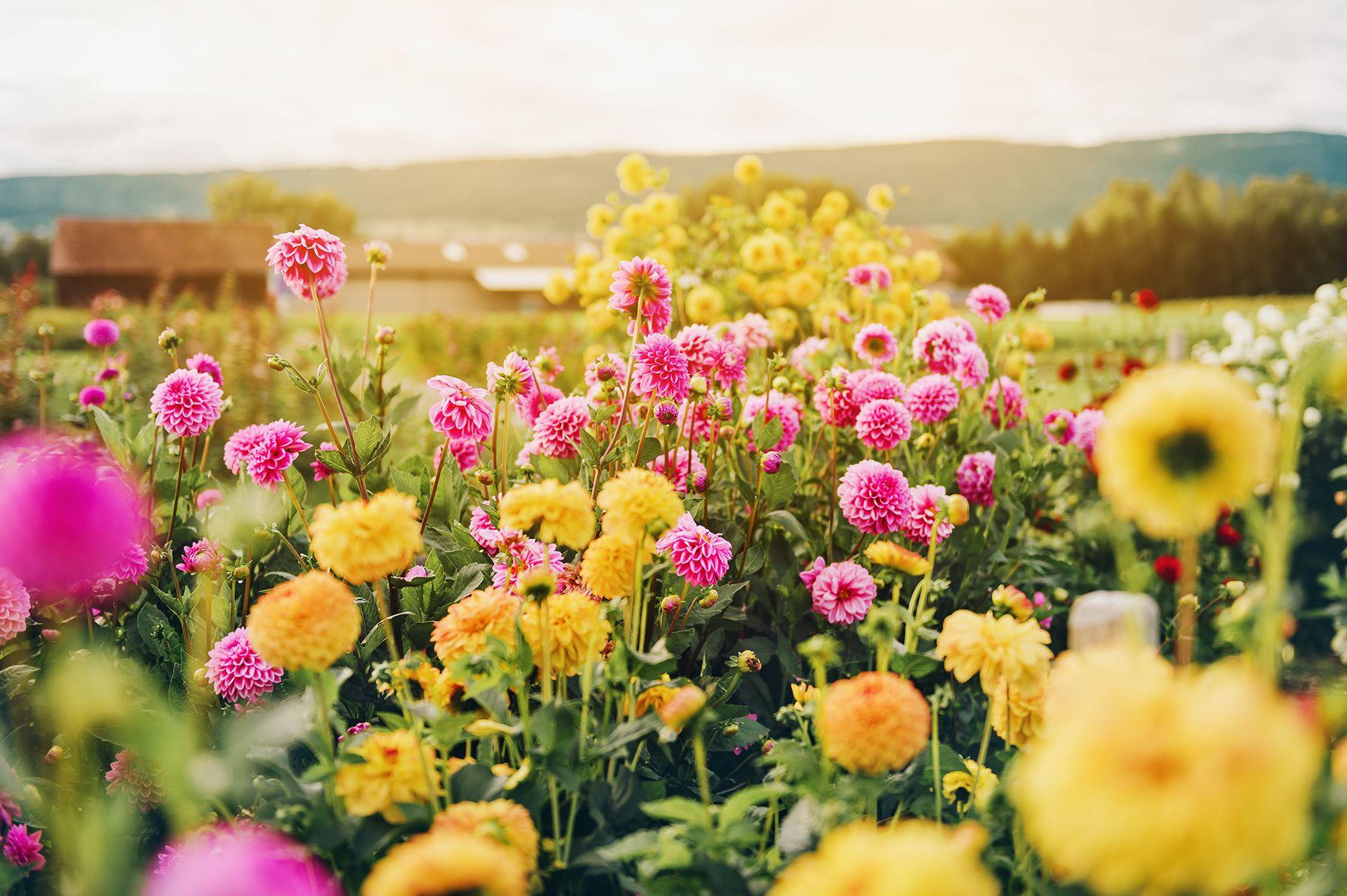 Pin on Wildflower