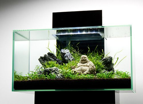buddhist statues in fish tanks - Google Search