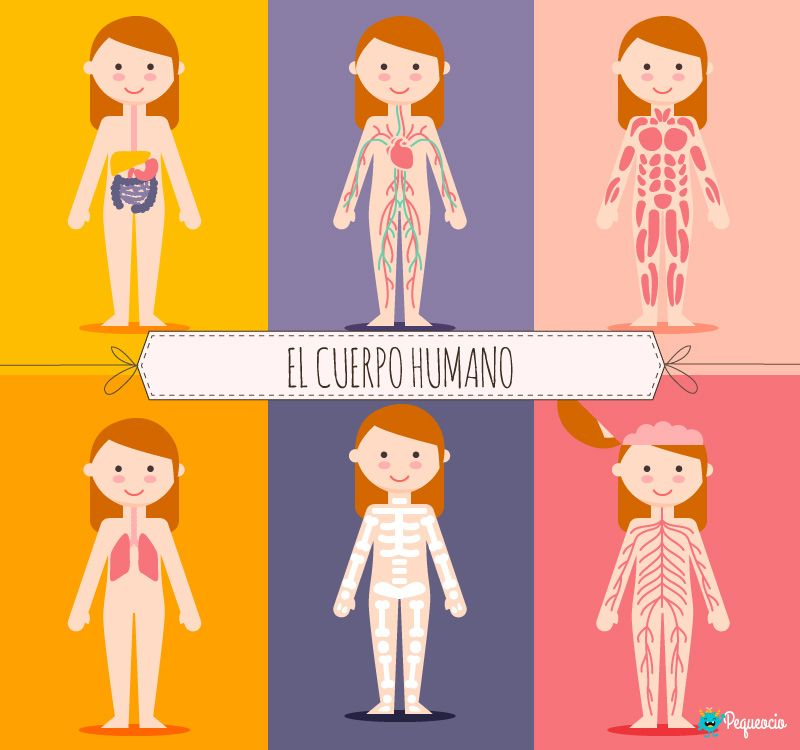 El Cuerpo Humano Y Sus Partes Con Imagenes Para Imprimir Cuerpo
