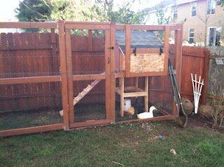 Our urban chicken & duck coop  Door to open at arms height