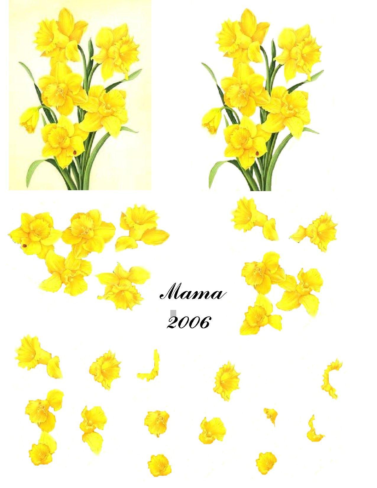 Daffodils d mama bords pinterest daffodils decoupage and