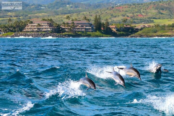 Whaler's Cove Resort