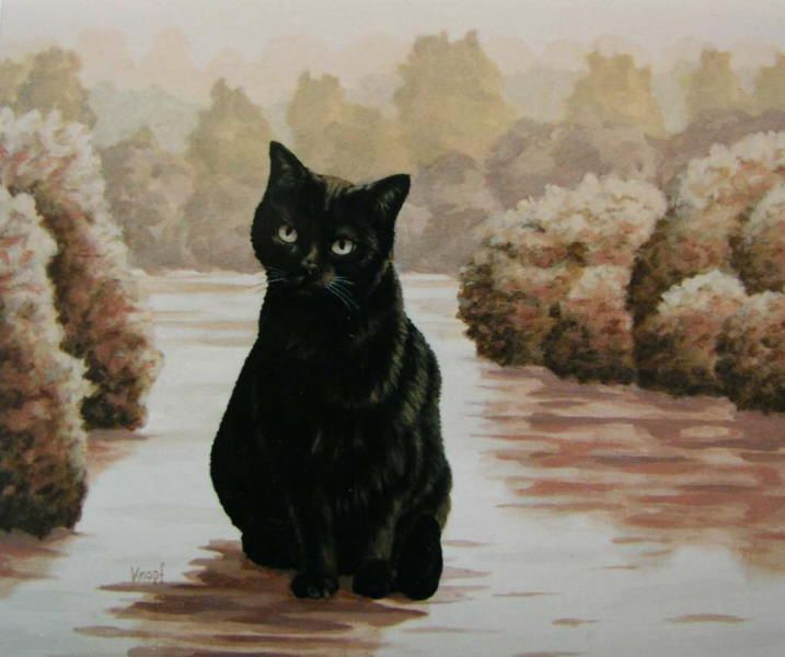 Black Cat Are Often Considered As A Symbol Of Evil Omens And