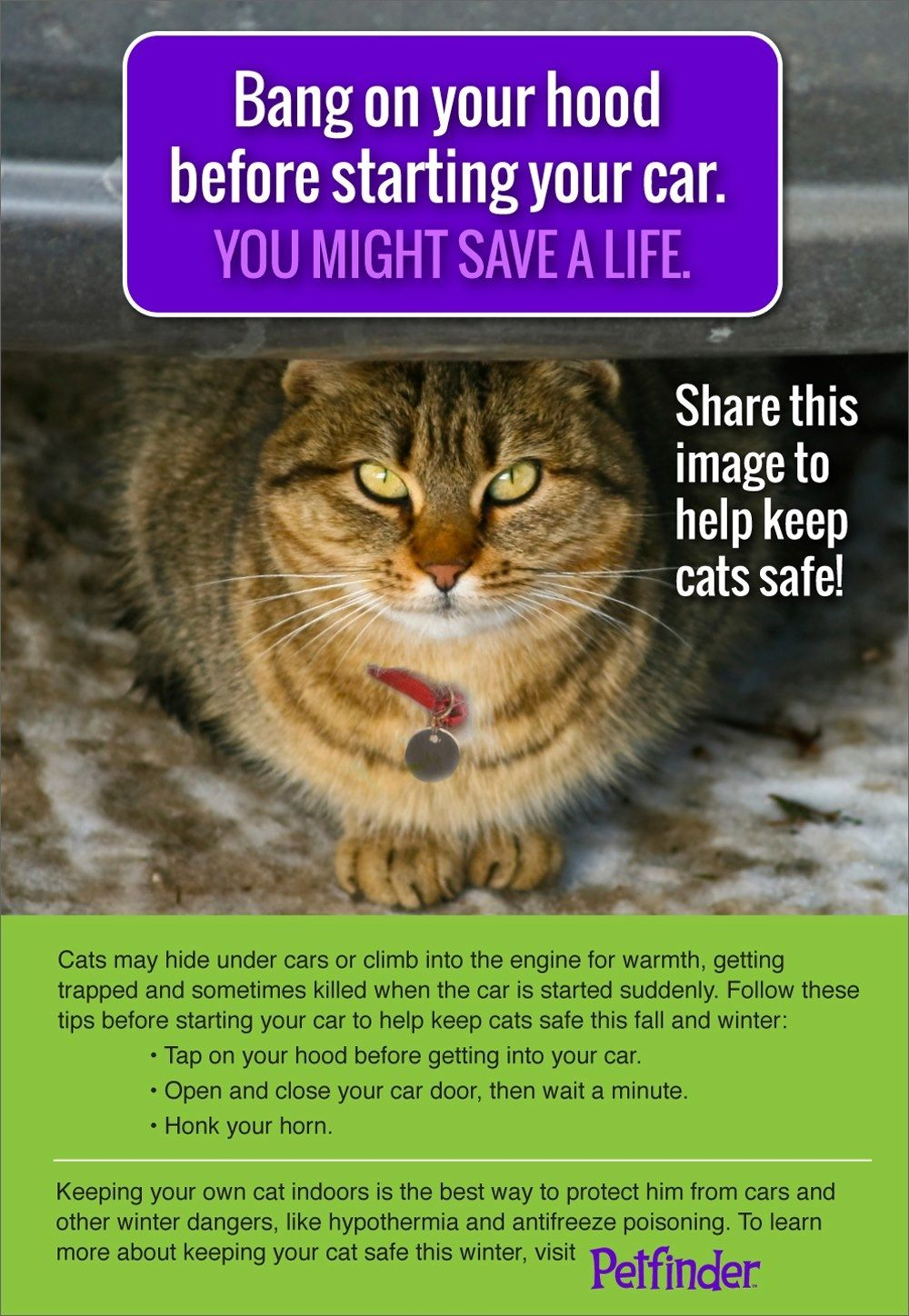 Keep Your Cat Safe From This Common Winter Danger Petfinder Cats Cat Safe Feral Cats