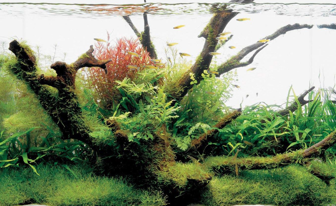 AquEscaping | escape into your aquatic ecosystem | Planted ...