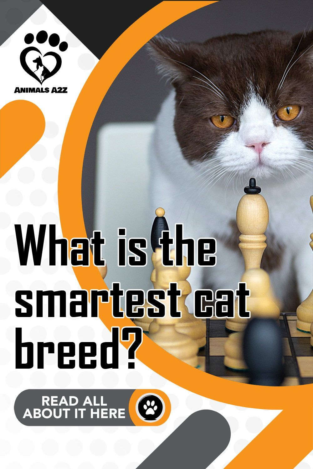 What Is The Smartest Cat Breed Detailed Answer In 2020 Cat Breeds Popular Cat Breeds Cat Facts