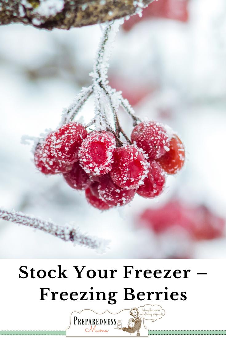 Preserve Your Harvest Freezing Berries Short Term Food