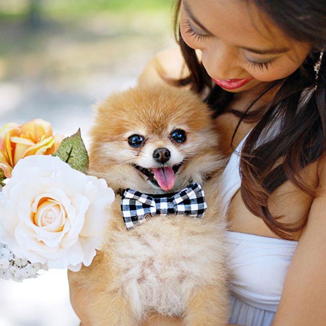 OMG Dog Bow Tie