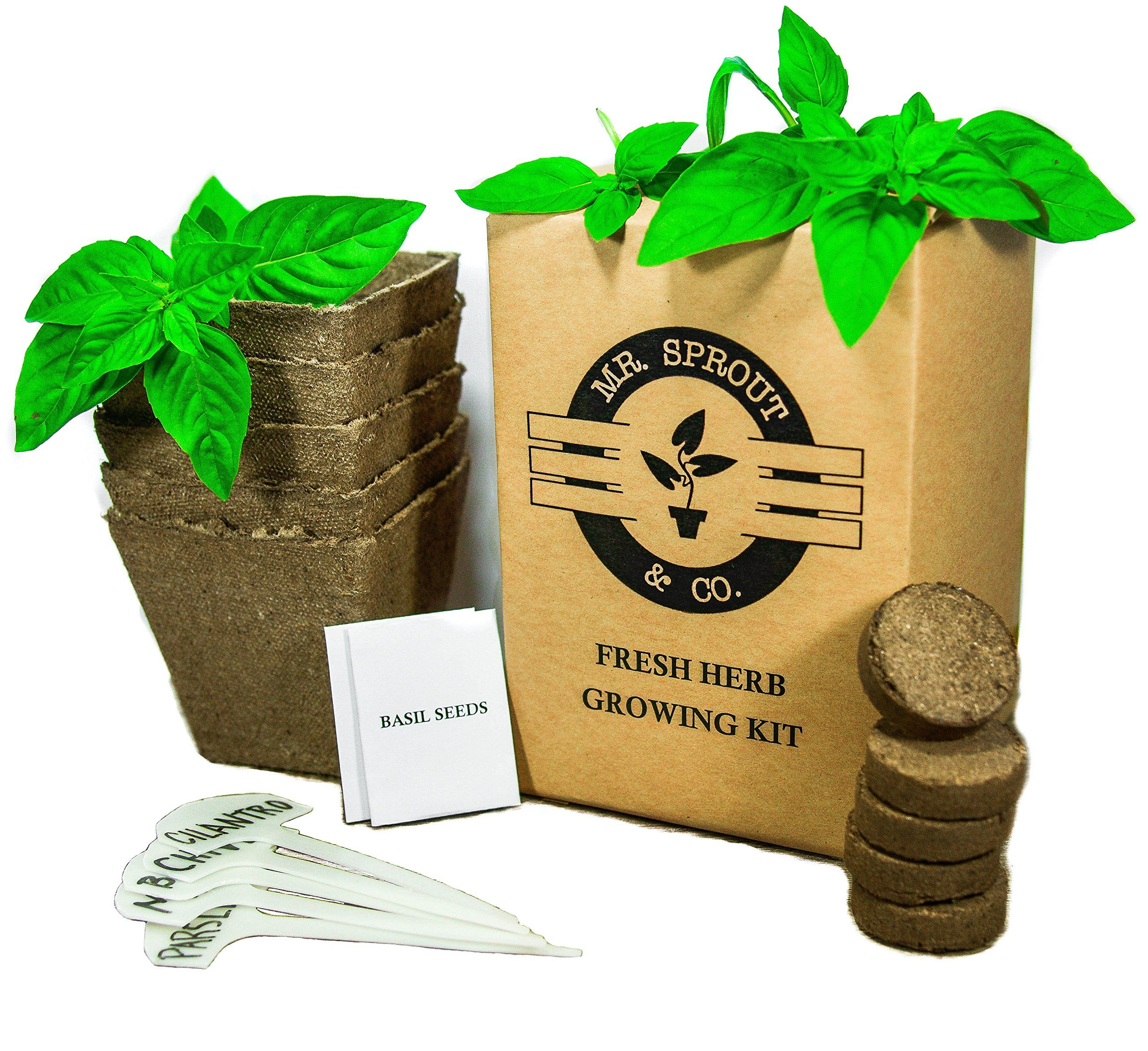 Charmant Mr. Sprout Organic Herb Kit: Seed Starter Kit   Easily Grow 5 Herbs With