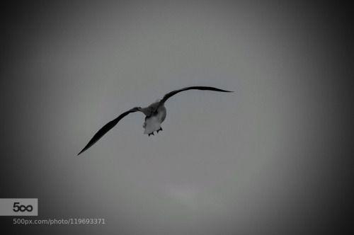 Flying away by AlexanderPolomodov http://ift.tt/1Kn32GS