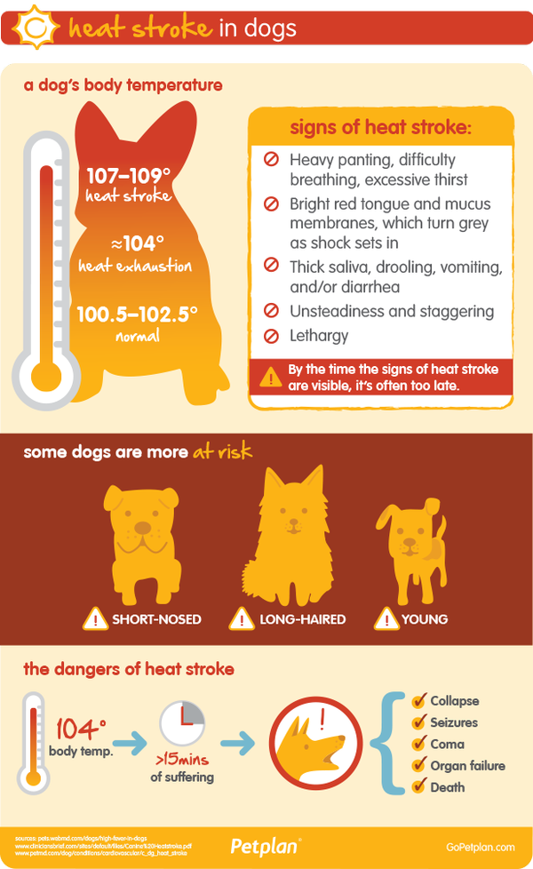 Hootsuite Heat stroke in dogs, Dog health, Dog care tips