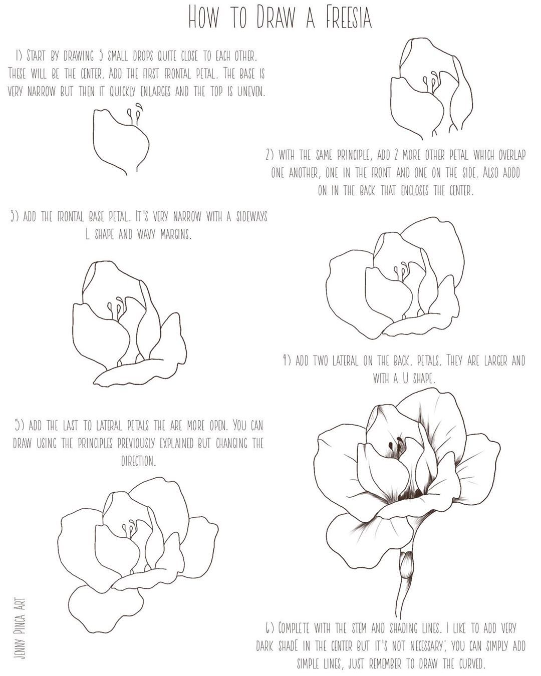 How To Draw A Freesia As Promised Here S My Drawingtutorial For Drawing The Freesia Open Flower Let Me Know W Nature Drawing Open Flower Drawing Tutorial