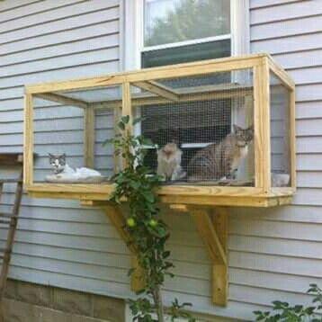 Great Idea For Indoor Cats Cat Window Outdoor Cat Enclosure Outdoor Cats