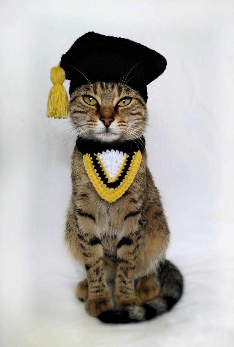 Graduation Costume For Cat Graduation Cat Cap Gift For Cat Etsy In 2020 Cat Gifts Cat Costumes Cat Lover Gifts
