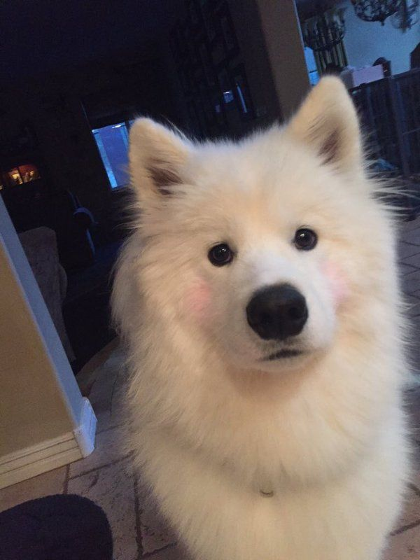 if ur having a bad day just look at this dog wearing blush