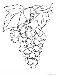 Картинки по запросу виноград раскраска | Раскраски, Эскиз ...