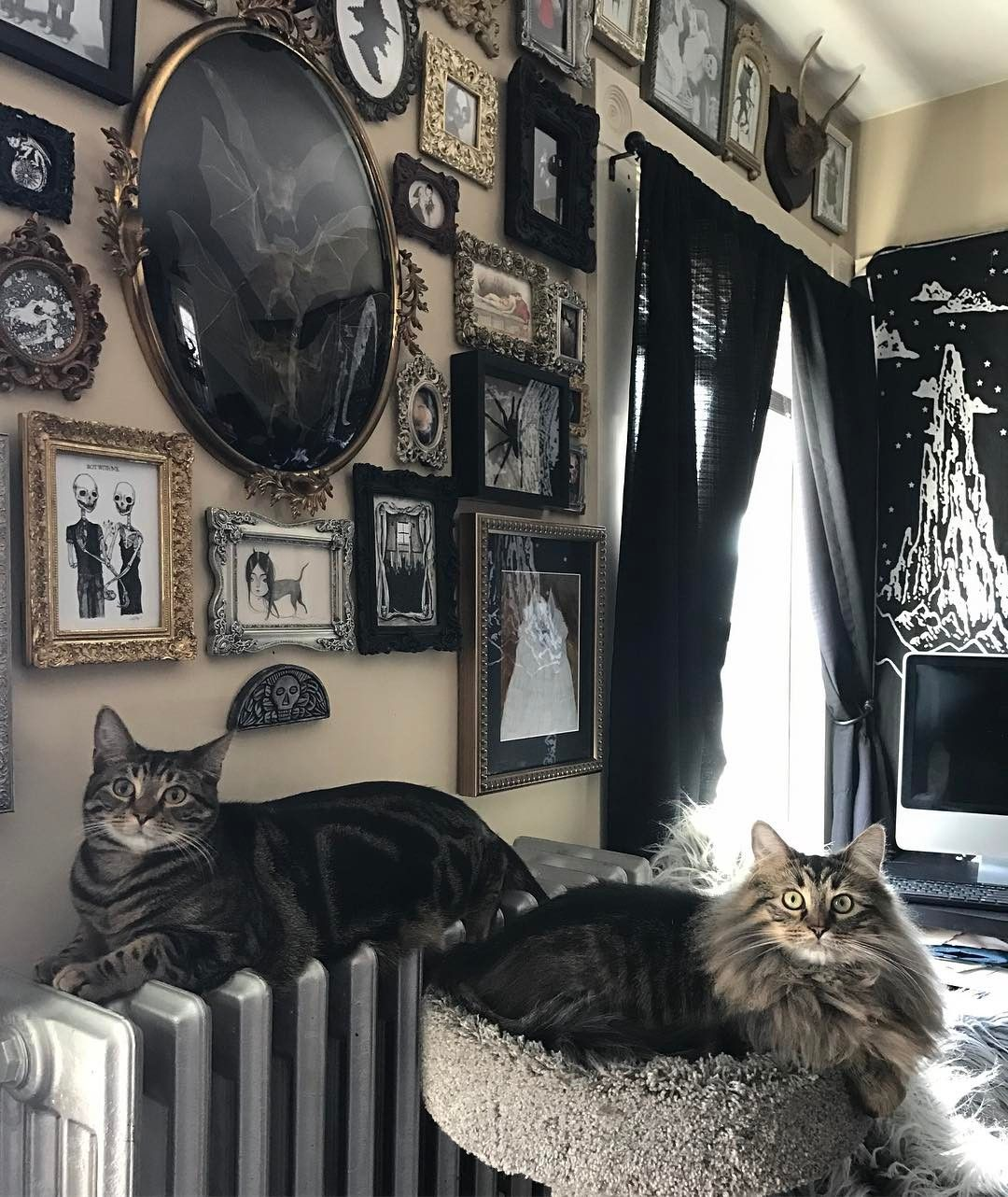 "Photo of ℭ𝔥𝔞𝔫𝔡𝔯𝔞 𝔊𝔬𝔯𝔢𝔚𝔦𝔱𝔠𝔥 🌙✨ on Instagram: ""Here's another picture of my kitties in front of this wall 😻🖤🕷🦇✨"""