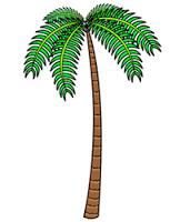 Tree Drawing Palm Tree Drawing Cartoon Trees