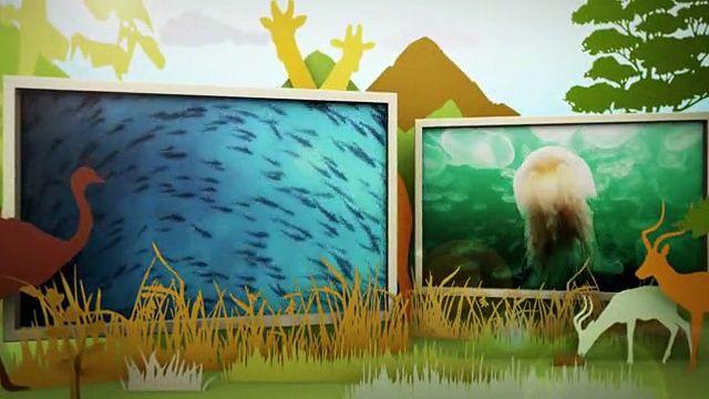 동물의 세계 - 야생의 격투기 클럽, 동물들의 영역싸움 (3) 12월 29일 (화) - http://heymid.com/%eb%8f%99%eb%ac%bc%ec%9d%98-%ec%84%b8%ea%b3%84-%ec%95%bc%ec%83%9d%ec%9d%98-%ea%b2%a9%ed%88%ac%ea%b8%b0-%ed%81%b4%eb%9f%bd-%eb%8f%99%eb%ac%bc%eb%93%a4%ec%9d%98-%ec%98%81%ec%97%ad%ec%8b%b8%ec%9b%80-2/
