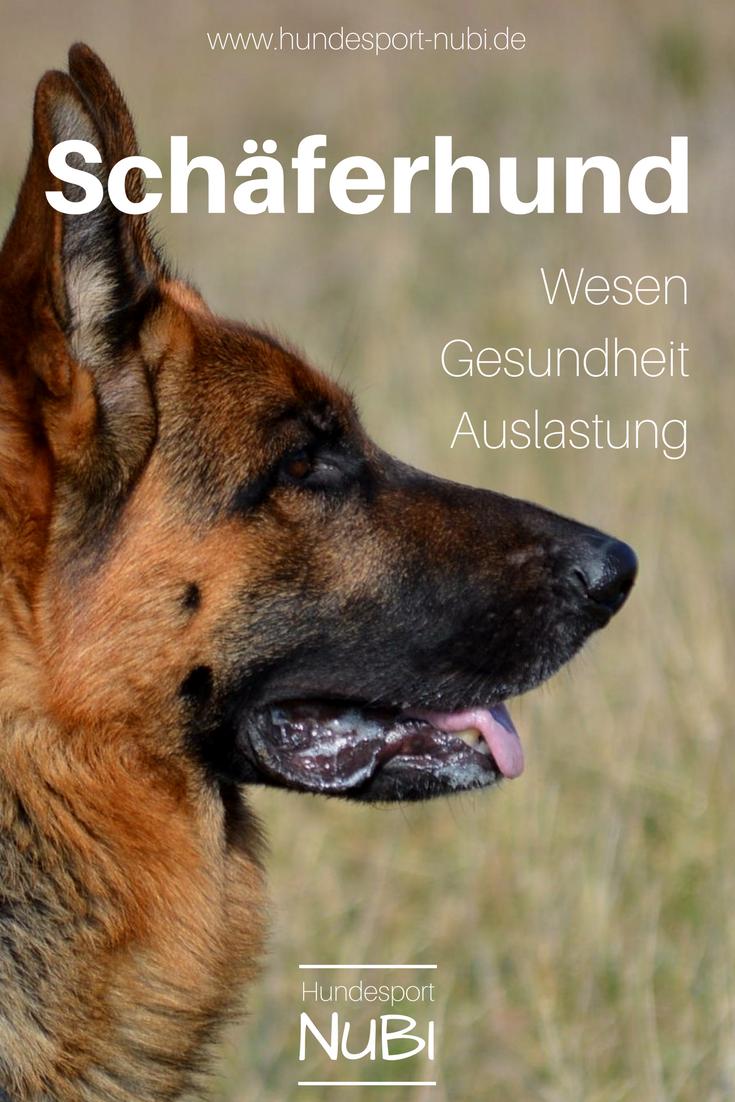 Der Deutsche Schäferhund Nubis Hunderassen Lexikon