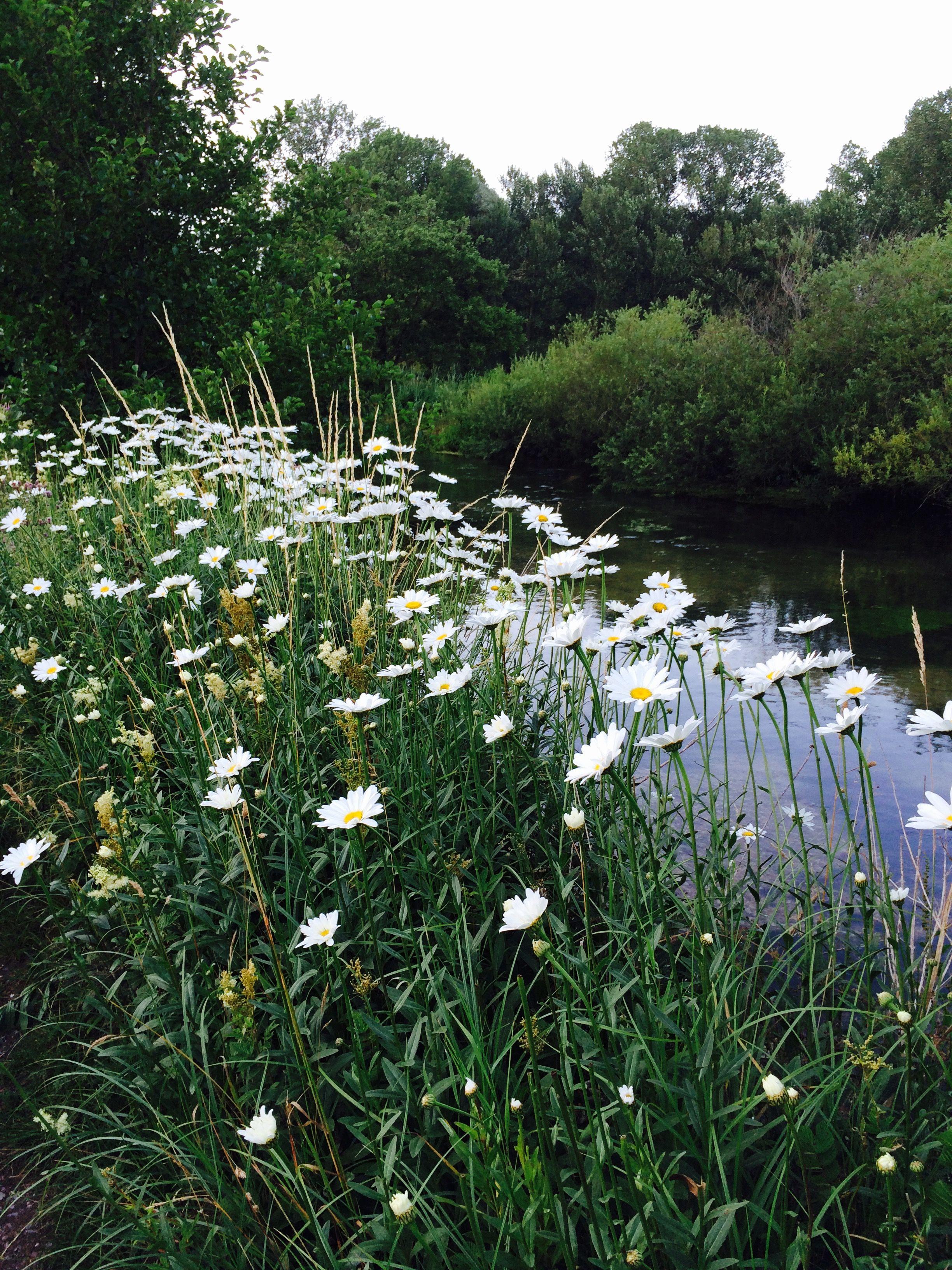 Whitchurch Hampshire | Hampshire, Explore