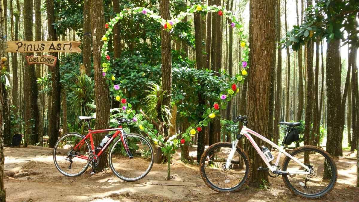 Hutan Pinus Pengger Info Spot Swafoto Instragamate Wisata Alamat Jogja Rute Alamat Fasilitas Wisata Hutan