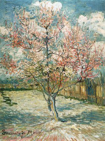 Peach Tree Van Gough